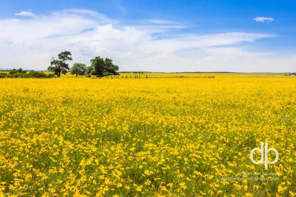 Fields of Golden Summer landscape photo by Dan Bourque