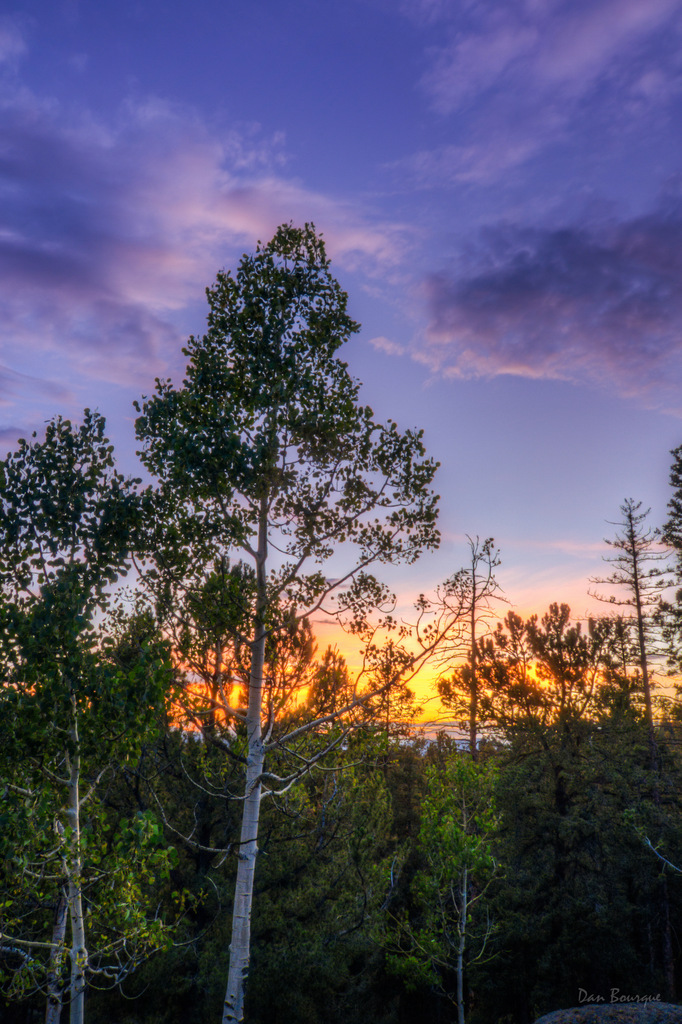 Green Aspens and Purple Skies landscape photo of Mueller State Park Colorado by Dan Bourque
