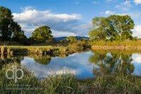 Peace at the Pond landscape photo by Dan Bourque