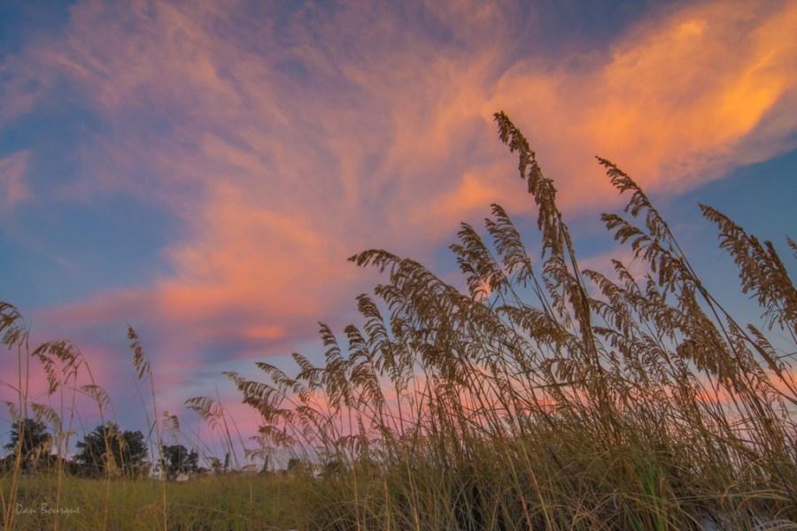 Sea Grass Under the Sunset landscape photo of Florida Gulf Coast by Dan Bourque