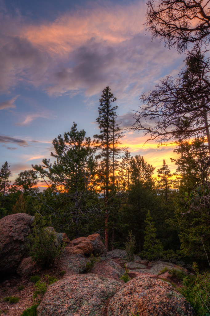 Standing Tall at Sunset landscape photo of Mueller State Park Colorado by Dan Bourque