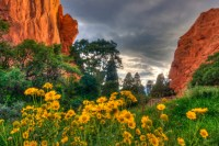 Sunflowers in the Garden landscape photo Garden of the Gods Colorado by Dan Bourque