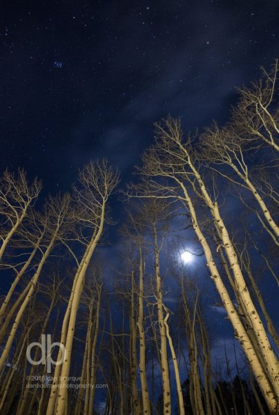 Winter Moon Through the Aspens landscape photo by Dan Bourque