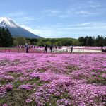 富士山ツーリング 芝桜まつり