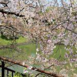 千鳥ヶ淵の桜 2014.4.8