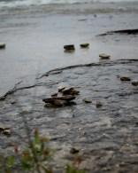 Peele Island - The slate beach