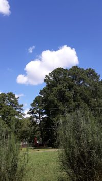 view from my front yard here in North Carolina