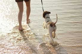 lose weight get a dog at beach