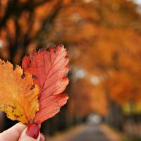 Miłe wspomnienie jesieni