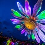 Flower power: Electric Daisy Carnival partners with RNBW World cannabis for 'Official Flower of EDC'Electric Daisy Edclv Flower Credit Dance Music Northwest