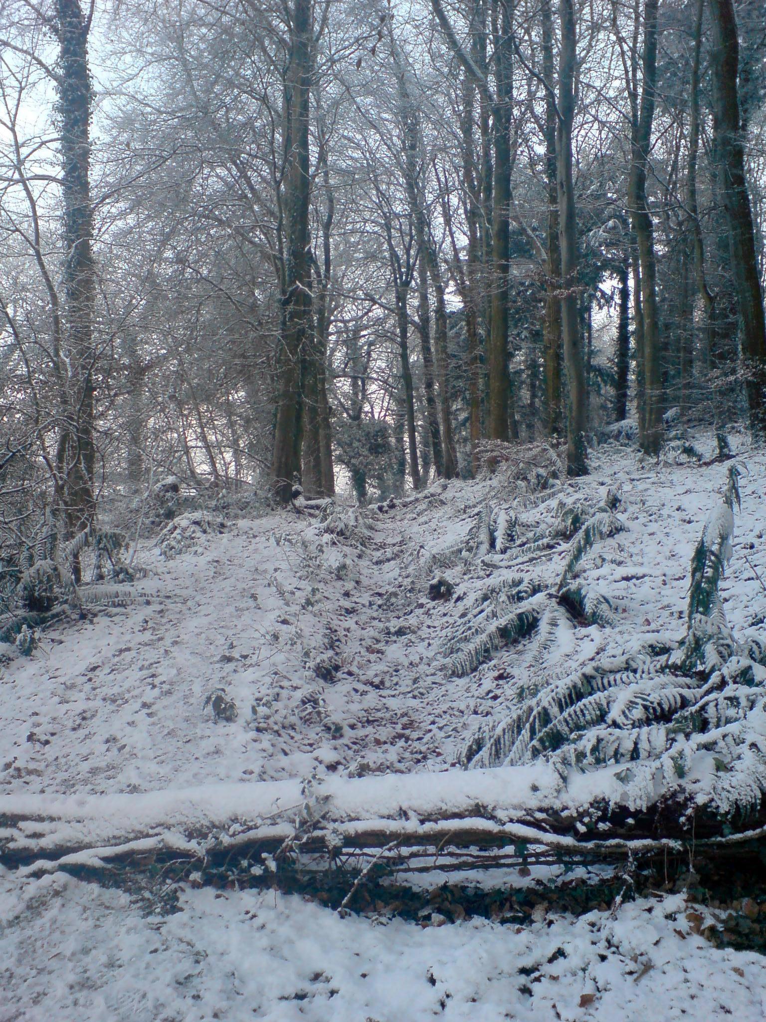 hillsborough forest in snow
