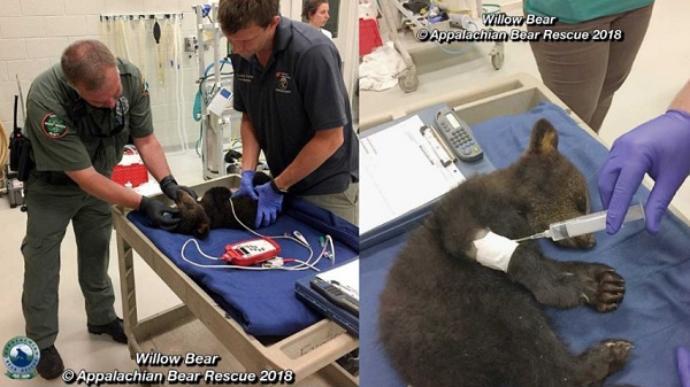 Appalachain-bear-rescue-cub4