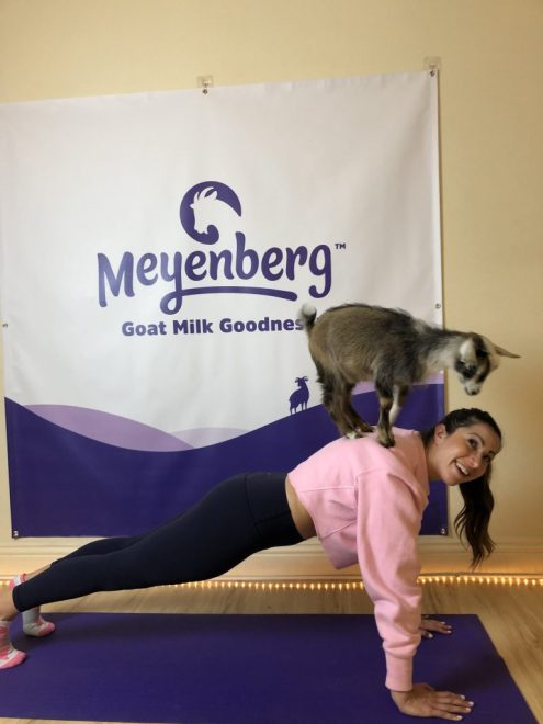 My First Time Hosting a Workout Class & Trying Goat Yoga! | Dancing for Donuts