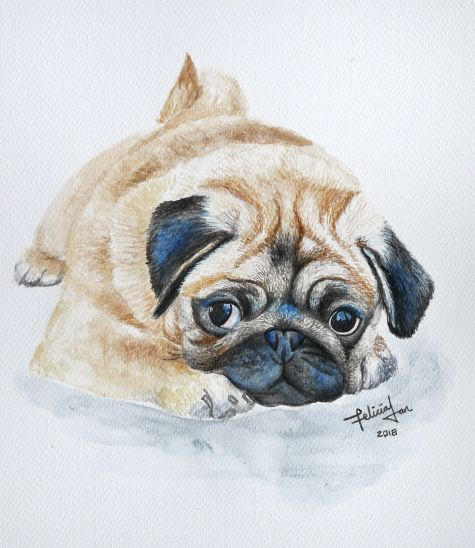 Bailey the Pug
