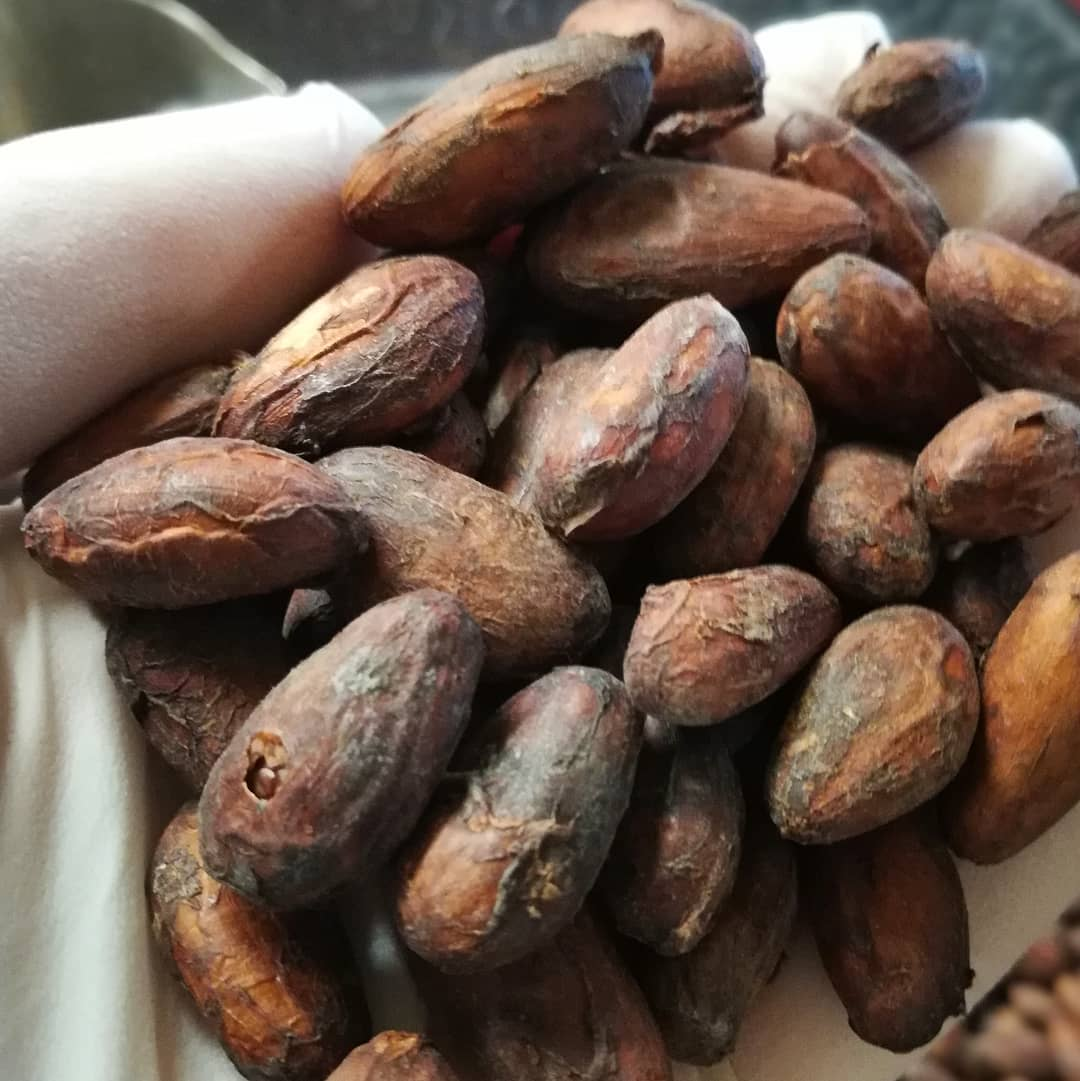 Freshly-roasted Puerto Rican cacao. Smells amazing. By next week I'll have turned it into chocolate.#chocolatier #coquicacao #beantobonbon #beantobar #puertorico @jeanmariechocolat