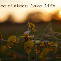the three-sixteen love life