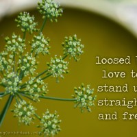 loosed by love to stand up straight and free