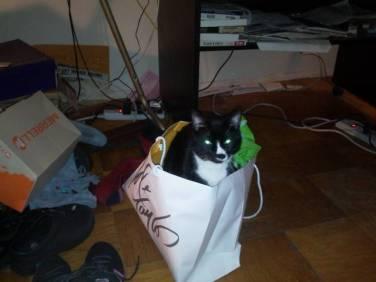 Sylvester (1)