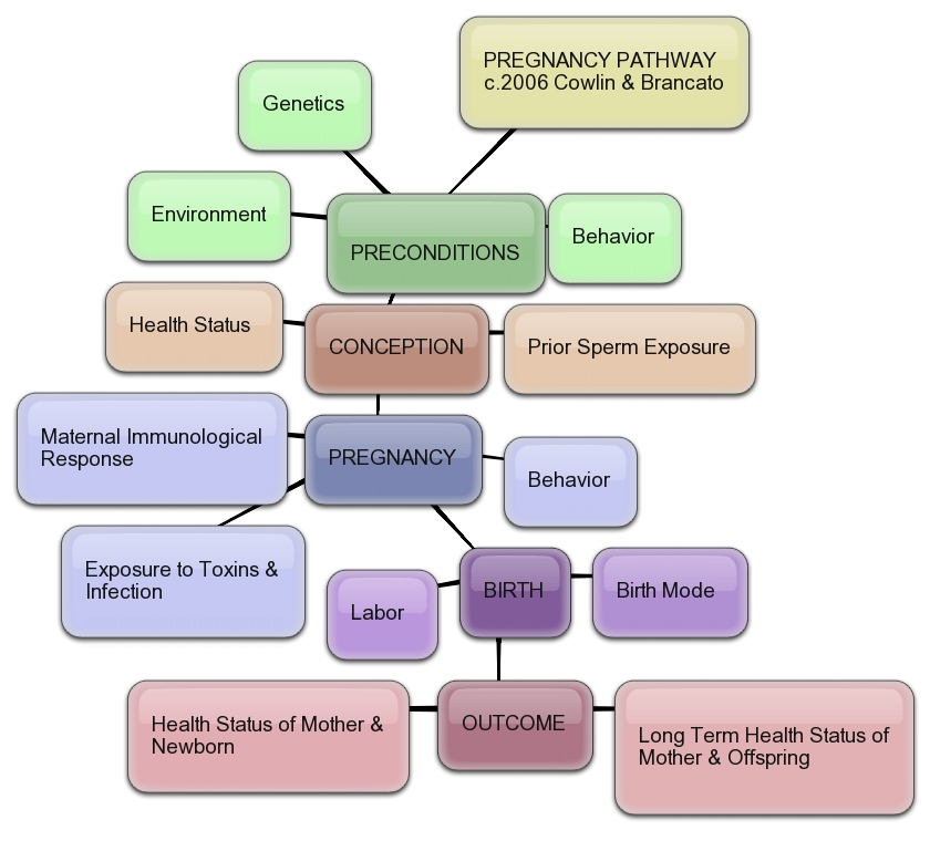 pregnancy_pathway