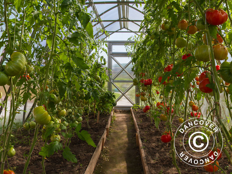 Greenhouses for homegrown produce