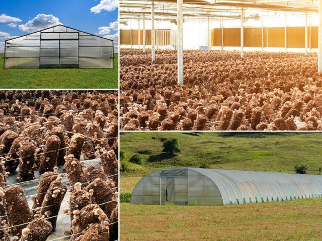 fungaie per coltivatori