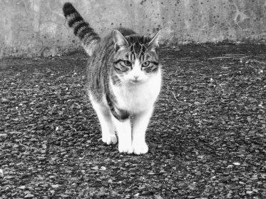 元野良猫ニコの兄弟