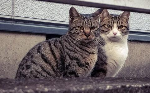 野良猫の寿命は三年
