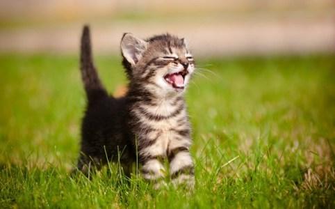 車にはねられてしまった子猫と母猫の話し