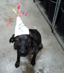 Winston party hat