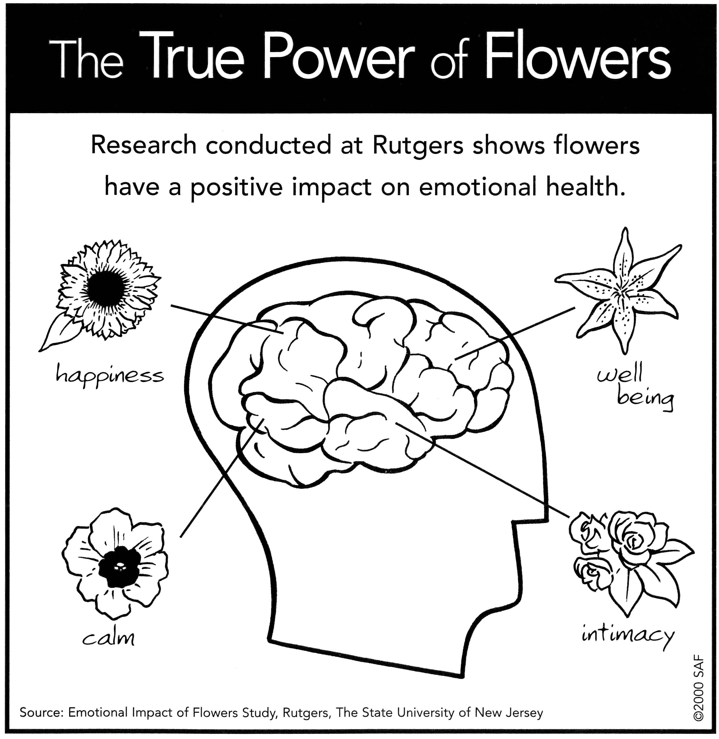 Dandelions Flowers Amp Ts