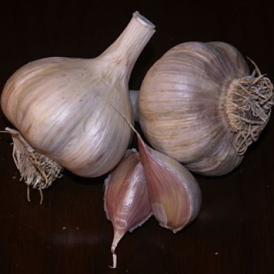 German Garlic