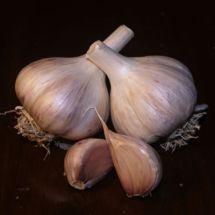 Romanian Garlic
