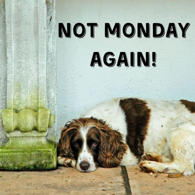 Not Monday again!