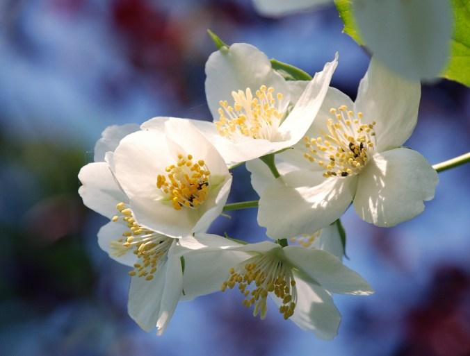 spring-flowers-1370683