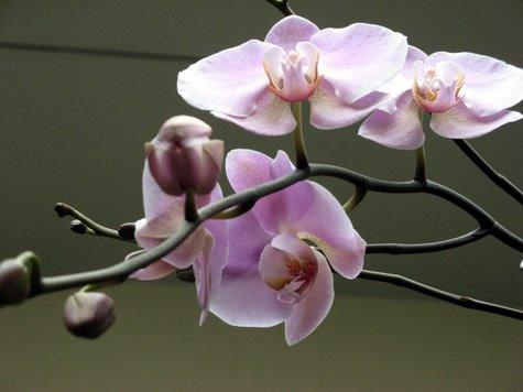 orchid-3830.jpg