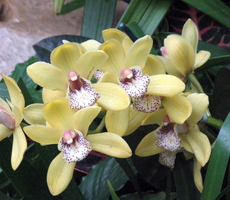 orchid-3831.jpg