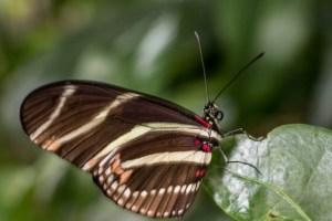 IMG_8178 butterflies March 2013