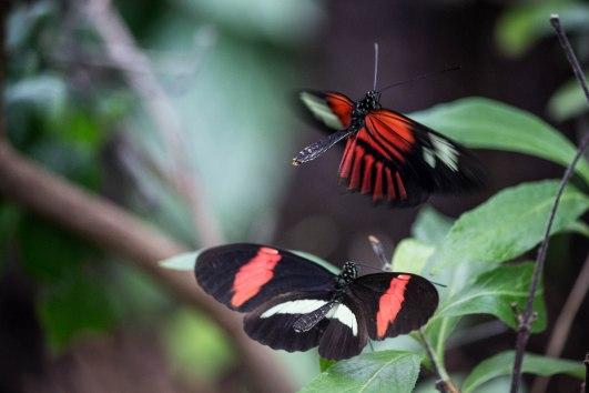 IMG_8226 butterflies March 2013