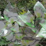 marble leaves-001