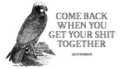 "EffinBirds: ""Come back when you get your shit together"""