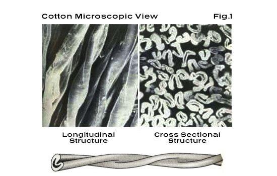 Cotton Microscopic View