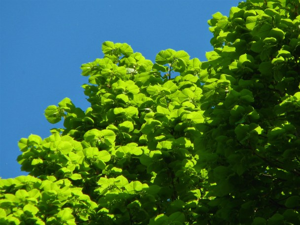 Lindengrün und Himmelblau