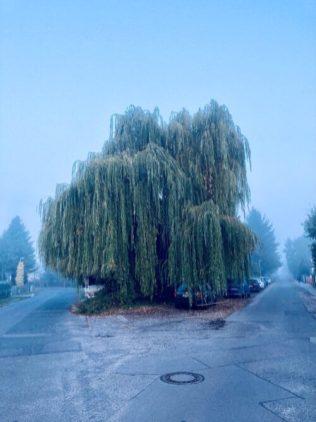 November - Nebel
