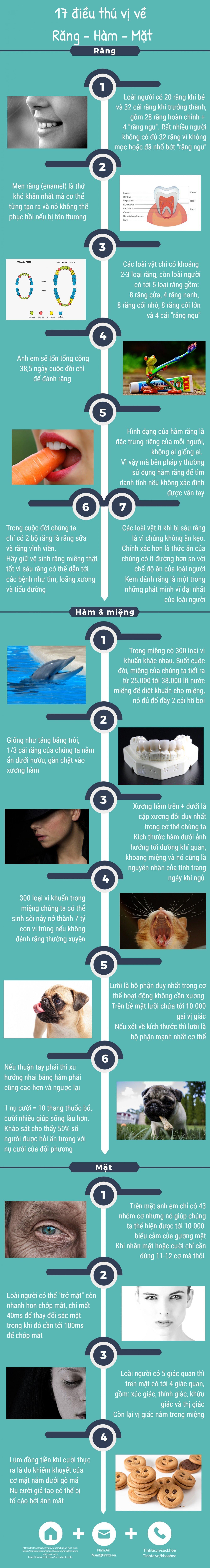 Tinhte_infographic_rang-ham-mat.jpg