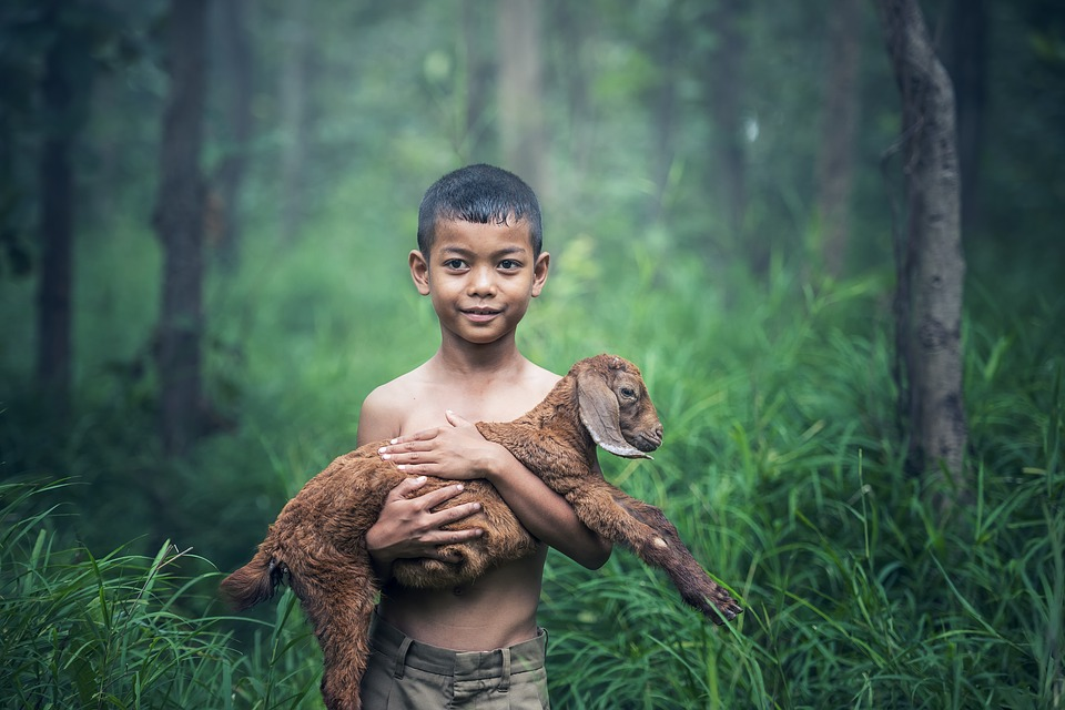Bé Trai, Ngoài Trời, Thái Lan, Bé, Động Vật Có Vú
