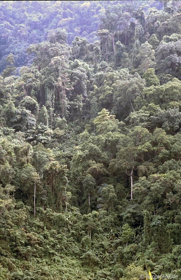 Phần cὸn lᾳi cὐa rừng nhiệt đới trên Đường mὸn Hồ Chί Minh