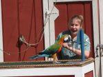 Bird show