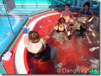 Triumph Hot Tub