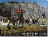 Seaworld Penguin Experience