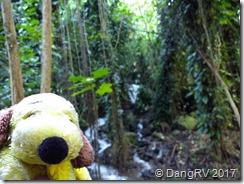 George loves rainforests